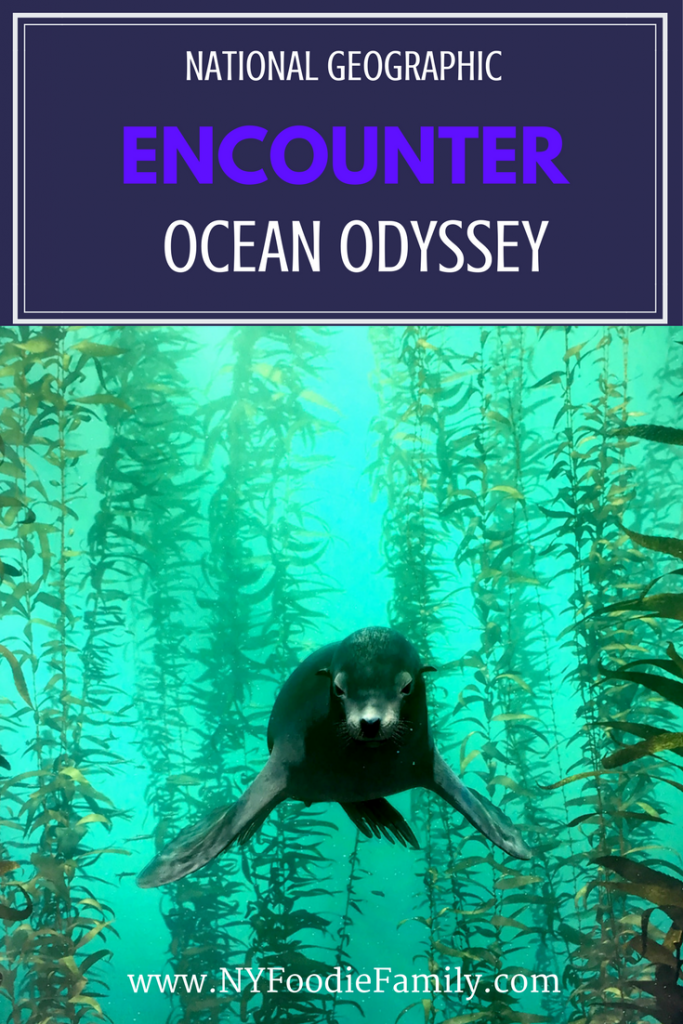 National Geographic Encounter: Ocean Odyssey is an immersive, family fun experience in NYC. Take a journey under the ocean and learn all about the sea and its life.
