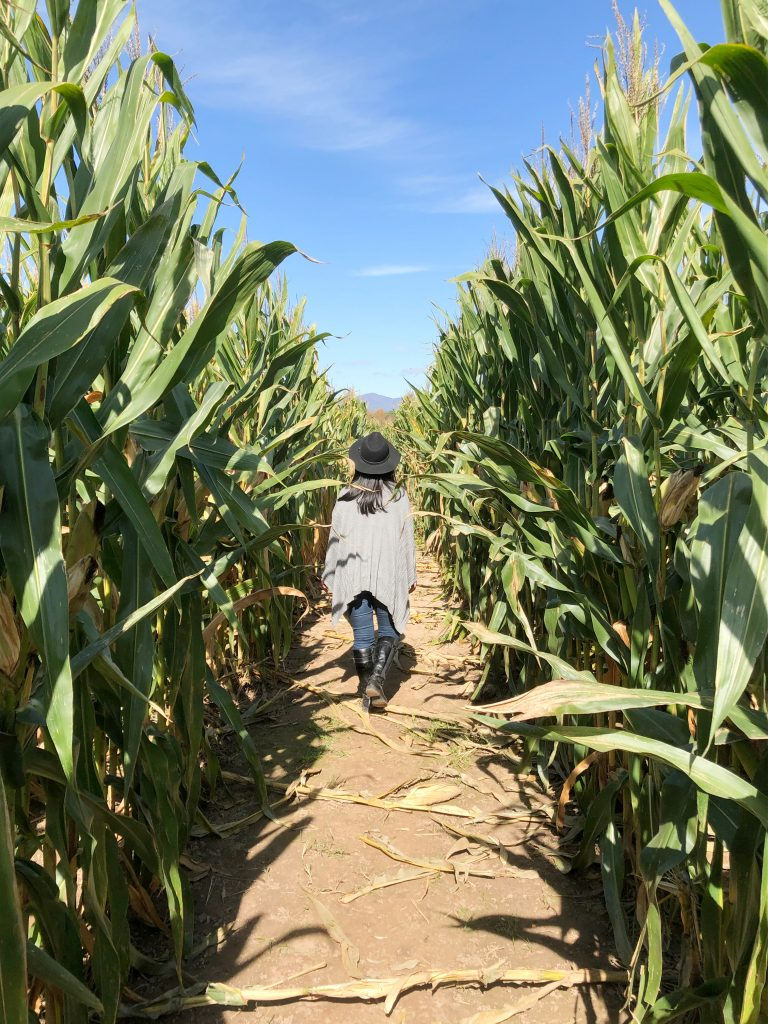 Kelder's Farm corn maze