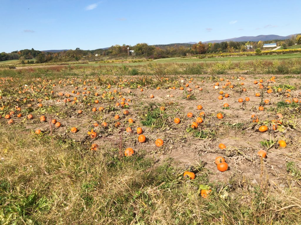 Kelder's farm pumpkin patch