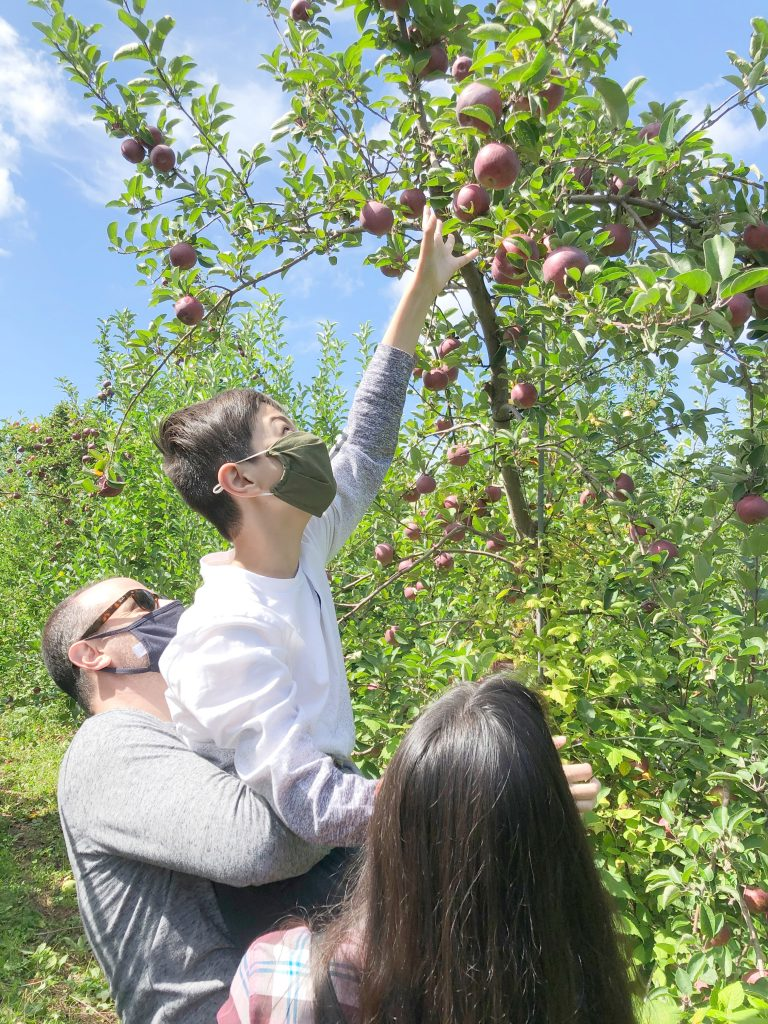 Soons Orchards - reaching for the highest apples